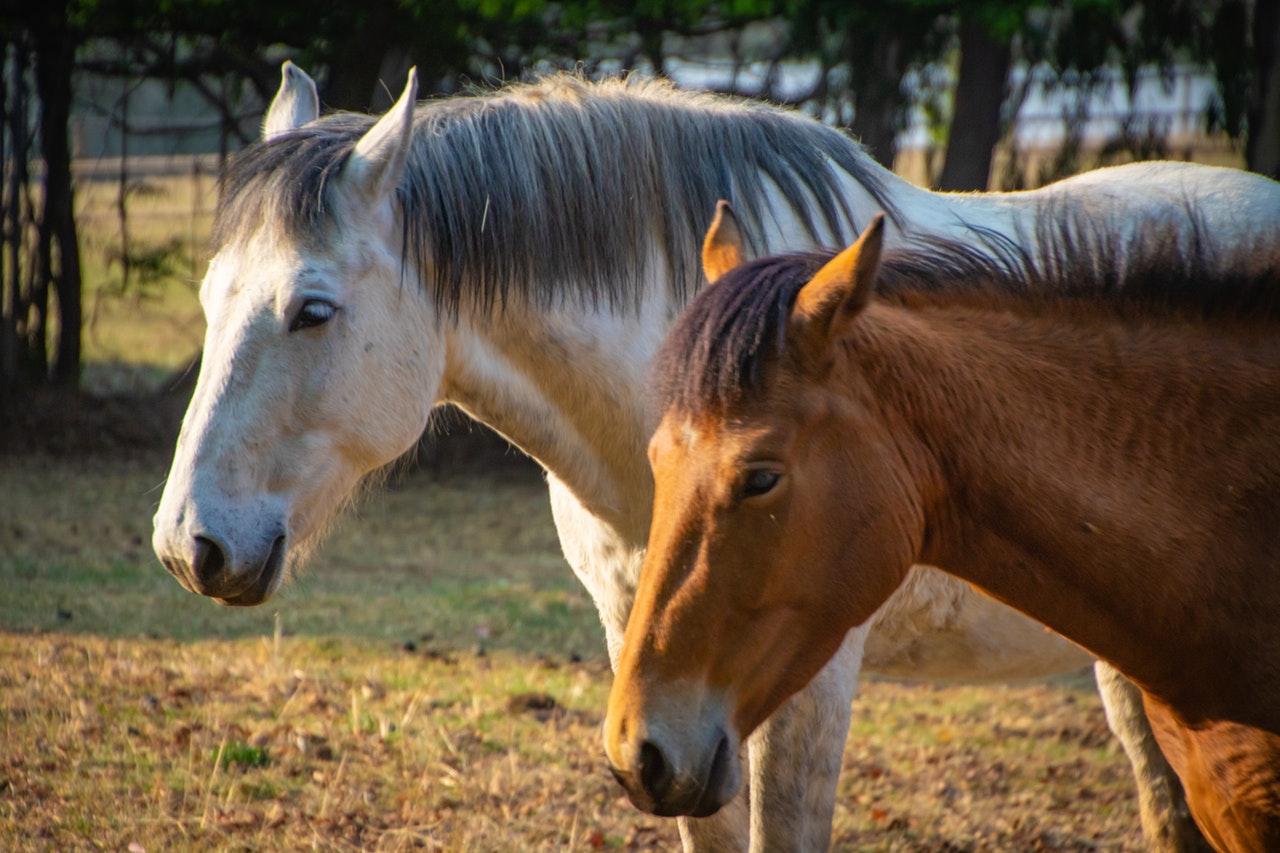 Är hästsport farlig?