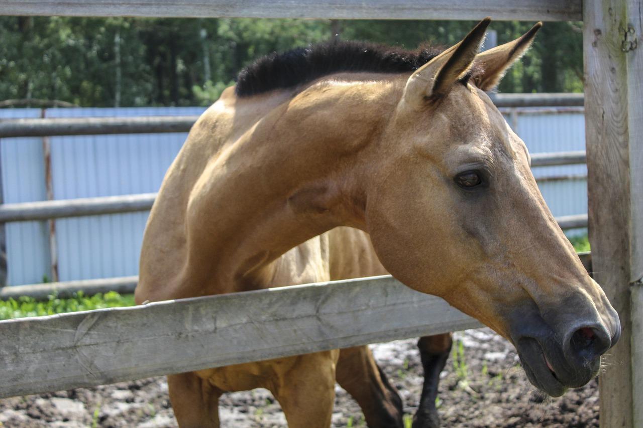 Att vara rädd för hästar