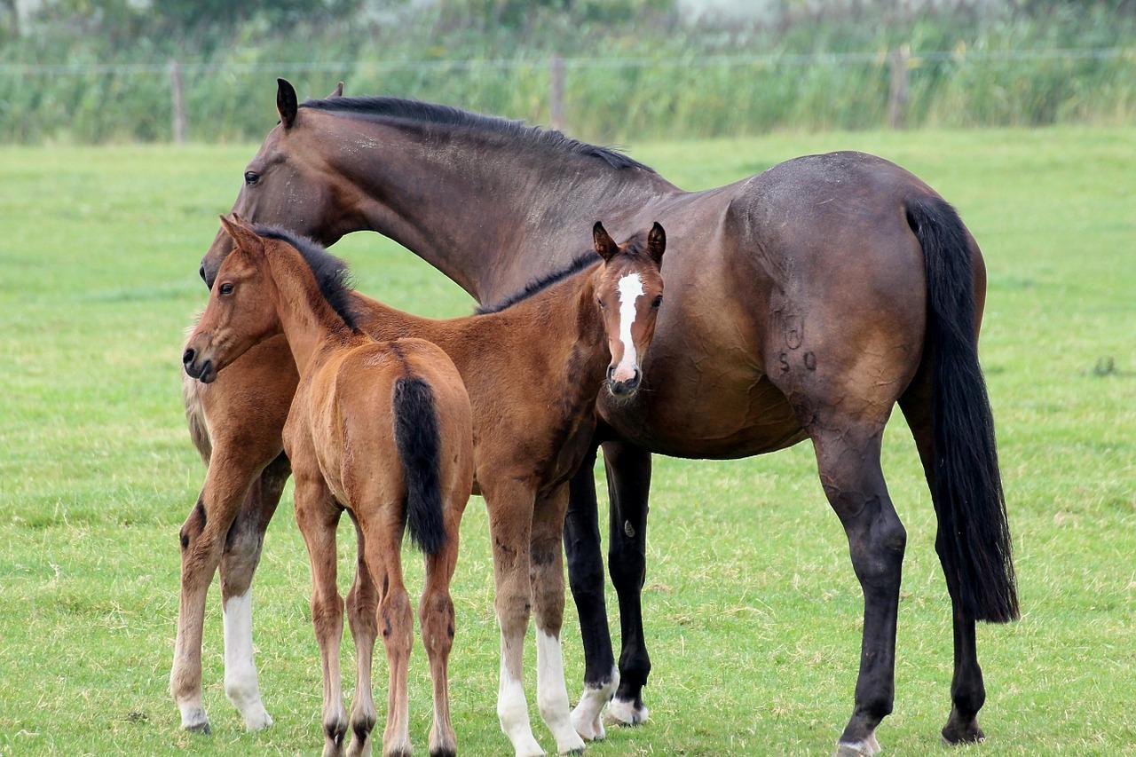 Att Köpa ett föl eller en vuxen häst?