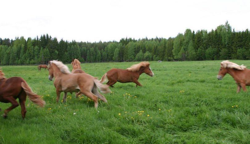 Håll ordning på hästens bete