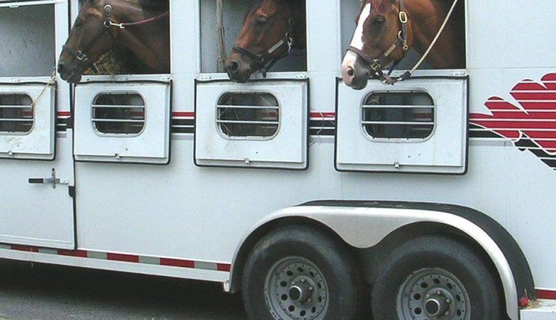 Att transportera hästen