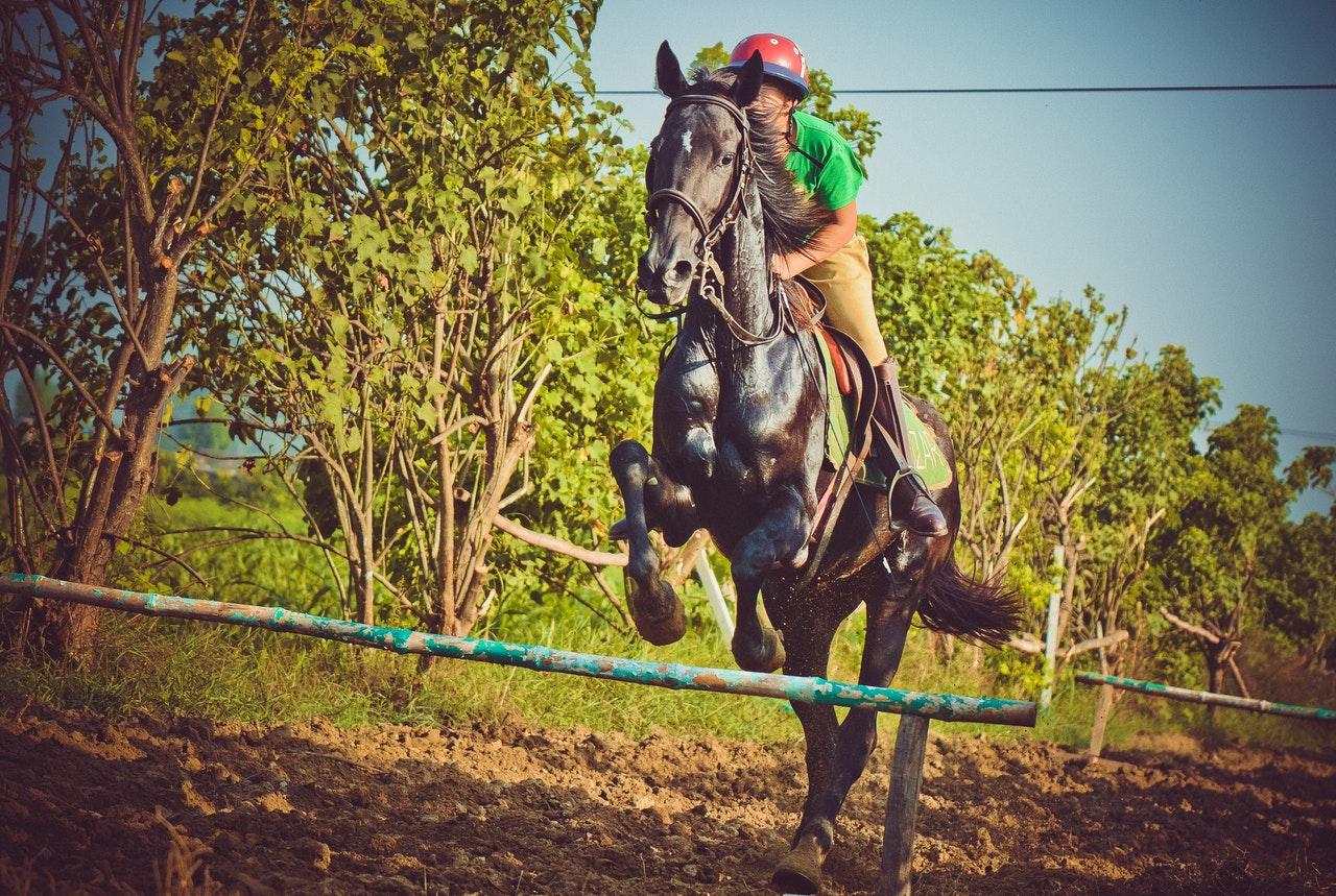 Ridskolor med olika hästsportgrenar